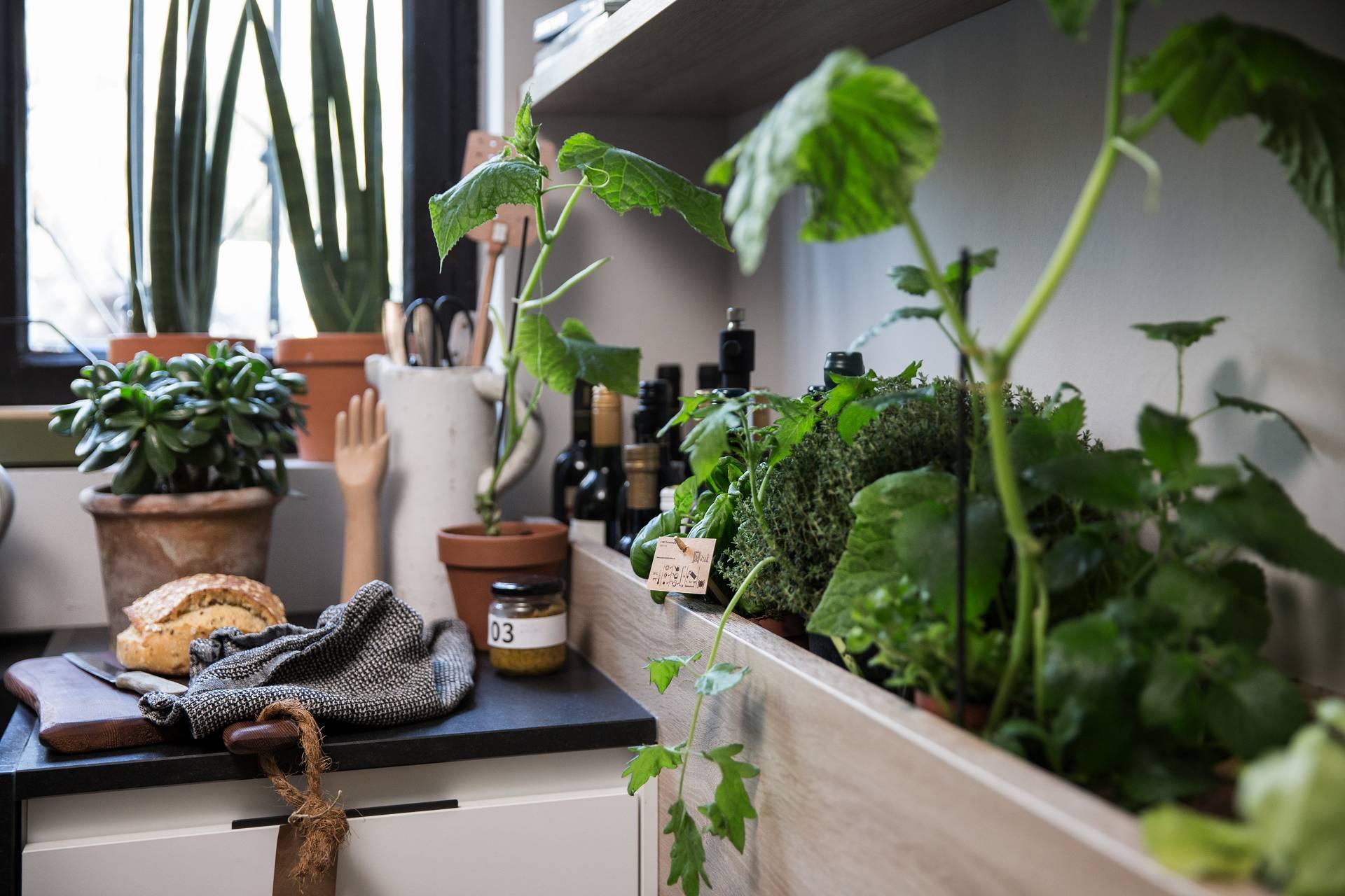 SieMatic Urban S2 SE herb garden grows fresh herbs in the kitchen